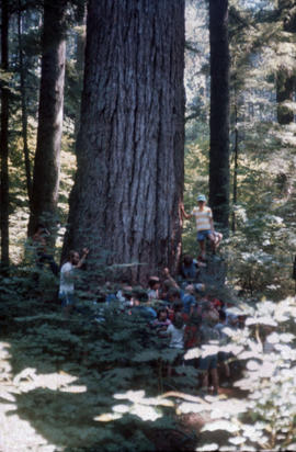 Children around large tree at Camp Capilano
