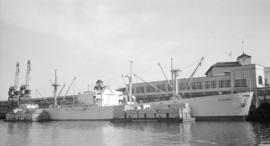 "S.S. Thunderbird [at dock, at Pier ""B"", with lumber-filled barges alongside]"