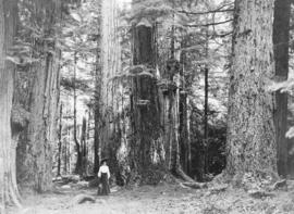 [Woman among the Seven Sisters in Stanley Park]