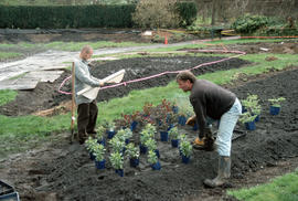 Arranging young plants  in a bed before planting