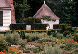 Gardens - United States : Williamsburg Colonial Garden