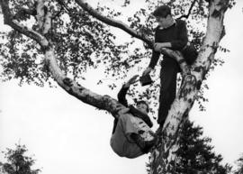 [Two boys climbing tree to see King George VI and Queen Elizabeth]