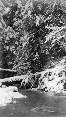 Snow scene in Stanley Park