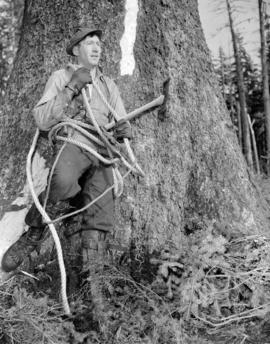 [Logger preparing to climb a tree on the Queen Charlotte Islands]