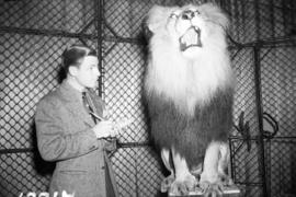 [Bill Flecher interviewing a lion at the Beacon Theatre]