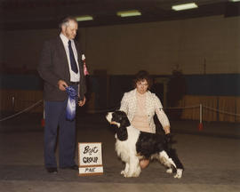 Best in Group [Sporting Group: Springer Spaniel]  award being presented at 1976 P.N.E. All-Breed ...