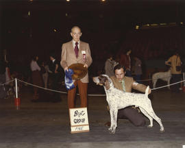 Best in Group [Sporting Group: German Shorthaired Pointer] award being presented at 1975 P.N.E. A...