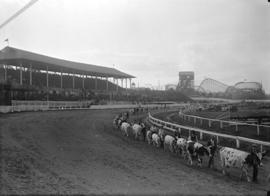 Vancouver Exhibition [parade of cattle on race track (giant dipper in background)]