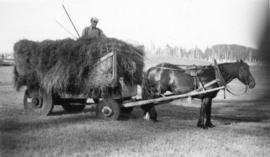 [Hauling hay home in a home-made solid wheel wagon]