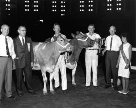 Group posing in Agrodome with award-winning cattle in 1964 P.N.E. Livestock competition