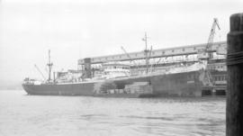 S.S. Tacoma City [at dock, with lumber-filled barges alongside]