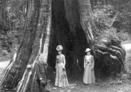 [Unidentified group in front of the Hollow Tree]