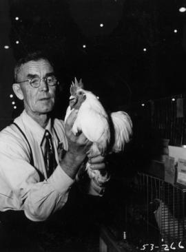 Man holding white rooster in poultry competition
