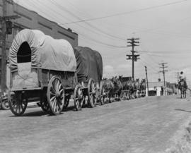 Old time cariboo horse drawn freight wagons with jerk line