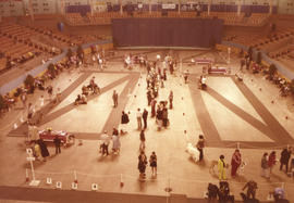Dog show '75 : [view of 1975 P.N.E. All-Breed Dog Show]