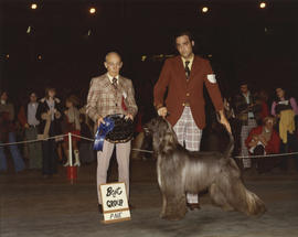 Best in Group [Hound Group: Afghan Hound] award being presented at 1975 P.N.E. All-Breed Dog Show