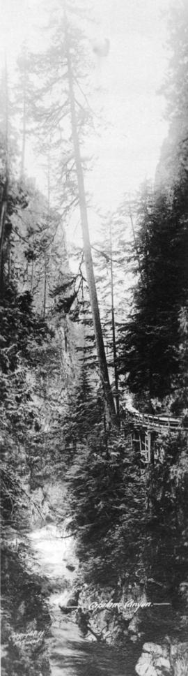 [Tall tree and flume], Capilano Canyon
