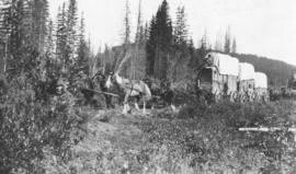 [Covered wagons on the Cariboo Road]