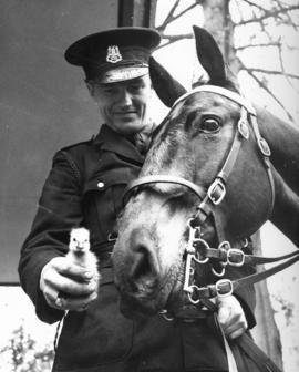 "[Constable Cliff Cooper introduces a gosling to his horse ""Trooper""]"