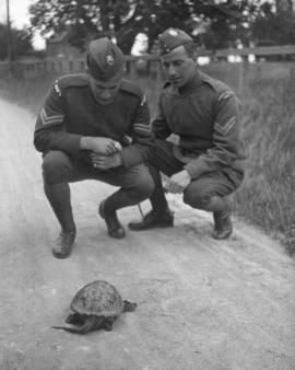 [James Crookall and another member of the Royal Flying Corps watching a turtle]