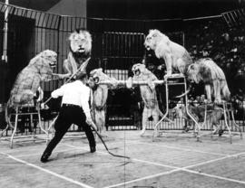Gossling's Lions : [publicity photo of circus performer with lions]