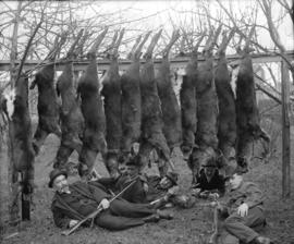 [Five men lying underneath twelve deer carcasses strung across two trees]