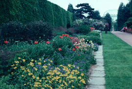 Gardens - United Kingdom : Royal Botanic Garden Edinburgh perennial bed, Dorouicum [carpetiancem]...