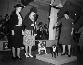 Trophy presentation at exhibition all-breed dog show [Bulldog and Boston Terrier]