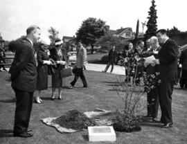 Planting of anniversary dogwood on City Hall grounds