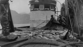Workers unloading fish from fishing scow