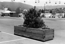 Greenery in a planter box on P.N.E. grounds, with Livestock building, Sky Glider chair lift, and ...