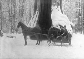 [A horse-drawn sleigh in front of the Hollow Tree]