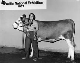 1977 P.N.E. 4-H Club competition winner poses with livestock and prizes