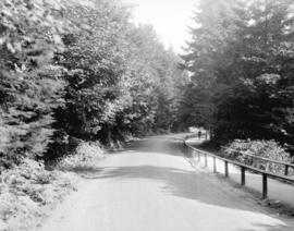 [Road through Stanley Park]