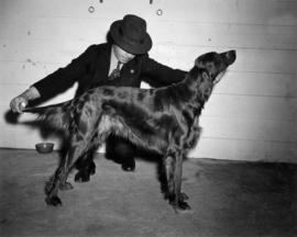 Man examining dark-colored dog