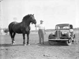 [A man and work-horse on Ryan's Farm]