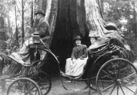 [A phaeton (carriage) driven by John Henry Cocking in front of the Hollow Tree]