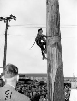 "Danny Sailor, the ""World Champion Tree Climber,"" climbing during performance on P.N.E. ..."