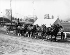 Six-horse draft team pulling Mainland Transfer Co. wagon on Hastings Park racetrack