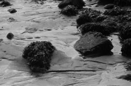 Tide drains back [kelp and rocks on sandy beach]