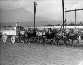Six-horse draft team pulling Ruby's Golf Course wagon on Hastings Park racetrack
