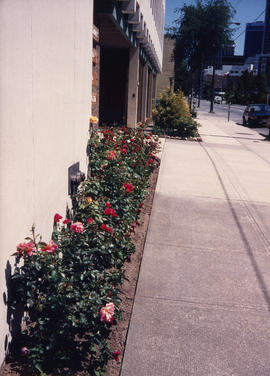 Front entrance rose garden [at 1477 West Pender Street]