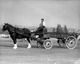 Horse pulling Crystal Dairy wagon