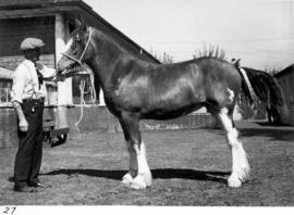 Horse owned by Duncan Montgomery