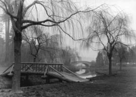 [Willows and bridges at Stanley Park]