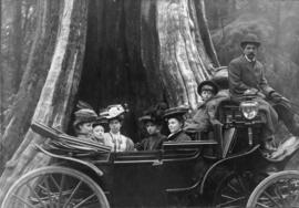 [Lillie sisters and boy in a carriage in front of the Hollow Tree in Stanley Park]