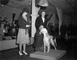 Trophy presentation at exhibition all-breed dog show [English Setter]
