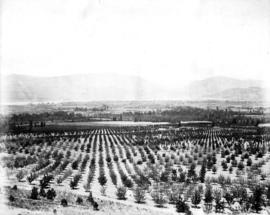 Orchards about Kelowna