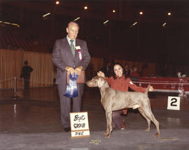 Best in Group [Sporting Group: Weimaraner] award being presented at 1974 P.N.E. All-Breed Dog Show