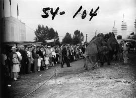 Shrine P.N.E. Circus elephants performing by Forum